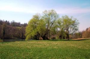 Ziljske vrbe AGP